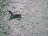 汐止-金龍湖~~~ 生態觀察:IMGP2024.JPG