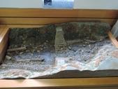 台灣櫻花鉤吻鮭生態中心:台灣櫻花鉤吻鮭生態中心7-20150301.JPG