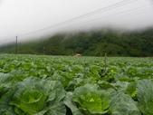 高冷蔬菜:IMGP8032.JPG