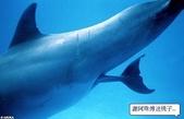 海豚是這樣出生的:海豚是這樣出生的2.jpg