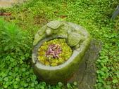 緣道觀音廟:IMGP1899.JPG