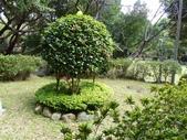 榮富公園~山櫻:榮富公園17-20150210.JPG