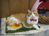 貓咪寫真:DSC07941.JPG