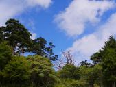 2011.10.08.09合歡山、清境農場:IMGP0505.JPG
