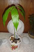 種子盆栽:DSC07223.JPG