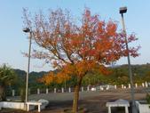 賞楓:鯉魚潭水庫風情IMGP3562.JPG