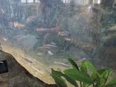 台灣櫻花鉤吻鮭生態中心:台灣櫻花鉤吻鮭生態中心4-20150301.JPG