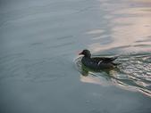 汐止-金龍湖~~~ 生態觀察:IMGP2020.JPG