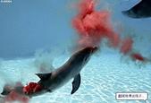 海豚是這樣出生的:海豚是這樣出生的3.jpg