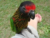 鳥類:DSC02635.JPG