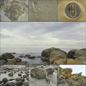 和平島-地質奇觀:4.jpg