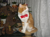 貓咪寫真:DSC02018.JPG