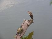 汐止-金龍湖~~~ 生態觀察:IMGP0090.JPG