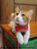 貓咪寫真:DSC04680.JPG