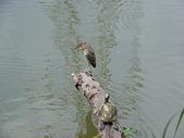 汐止-金龍湖~~~ 生態觀察:IMGP0088.JPG