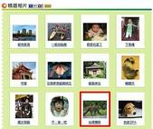 上精選相片:台灣獼猴.jpg