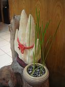 中東海棗種子盆栽:DSC00187.JPG