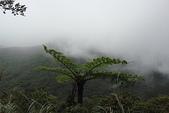 陽明山美景:DSC08361.JPG