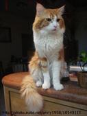 貓咪寫真:DSC01449.JPG