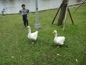 大白鵝:DSC09777.JPG