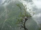 太魯閣國家公園-:DSC04534.JPG