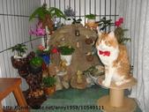 貓咪寫真:DSC02015.JPG
