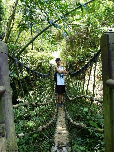 桐林森林生態園區 - 桐林森林生態園區