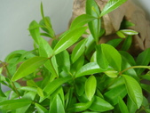 種子盆栽:DSC08496.JPG