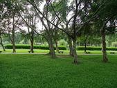 大湖公園~~~~黃昏隨意拍:IMGP1671.JPG