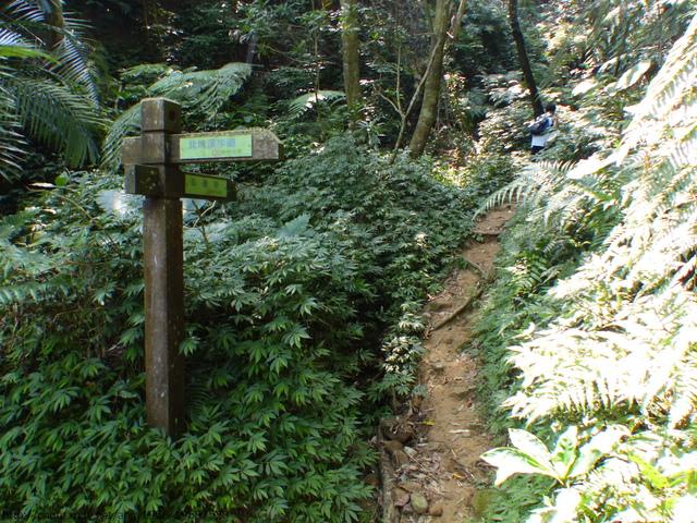 P1380731.JPG - 桐林森林生態園區