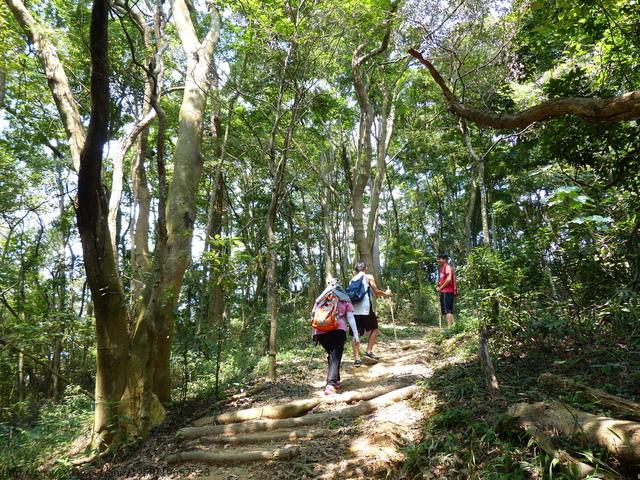 P1380810.JPG - 桐林森林生態園區