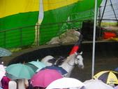 2011.10.08.09合歡山、清境農場:IMGP1249.JPG