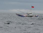 龜山島海域乘風破浪賞鯨豚:龜山島海域乘風破浪賞鯨豚