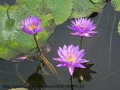 植物:IMGP2200.JPG