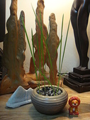 中東海棗種子盆栽:DSC00156.JPG