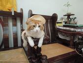 我是貓咪不是狼出沒!!!!!!:我是貓咪不是狼出沒!!!!!!
