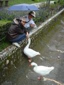2011.10.08.09合歡山、清境農場:DSC09677.JPG