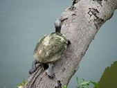汐止-金龍湖~~~ 生態觀察:IMGP0092.JPG