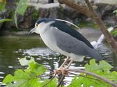 鳥類:光華池隨意拍 IMGP4470.JPG