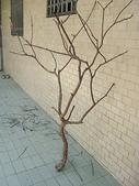 手工藝品:漂流木花器DIY DSC04419.JPG