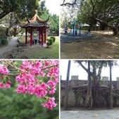 榮富公園~山櫻:相簿封面