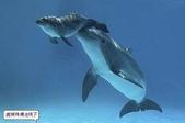 海豚是這樣出生的:海豚是這樣出生的5.jpg