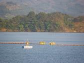 賞楓:鯉魚潭水庫IMGP3525.JPG