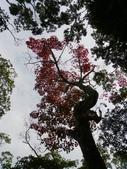 賞楓:2011.12.25馬拉邦山賞楓IMGP3369.JPG
