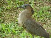 鳥類:IMGP1046.JPG