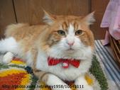 貓咪寫真:DSC07963.JPG