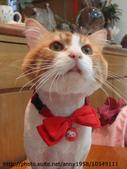 貓咪寫真:DSC04689.jpg