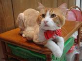 貓咪寫真:DSC04681.JPG