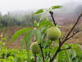高冷蔬菜:IMGP8086.JPG