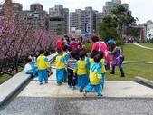 東湖樂活公園櫻花~寒櫻:東湖-樂活公園櫻花1-20150129.JPG